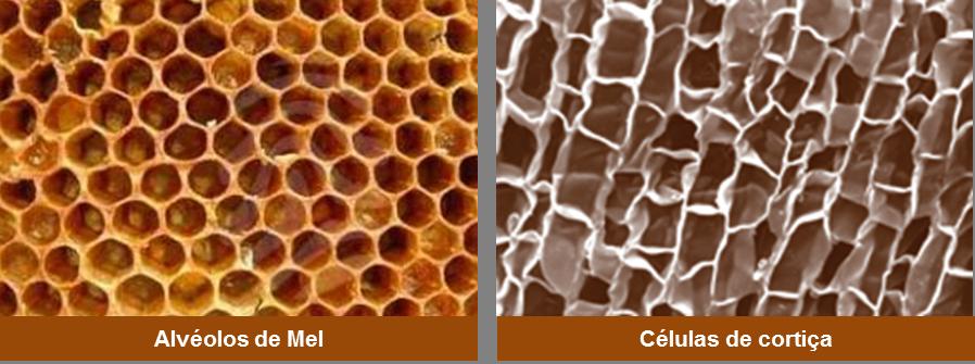 celulas-cortica-e-alveolos-de-mel(1)
